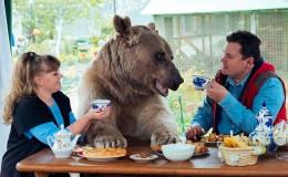 俄夫妇养270斤熊23年 每日同桌进餐