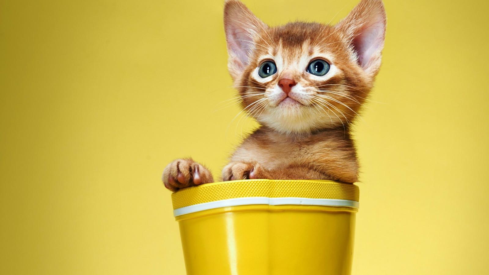 三个关于猫的人生感悟